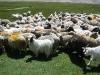 ladakh-2009-058