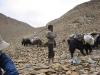 ladakh-2009-073